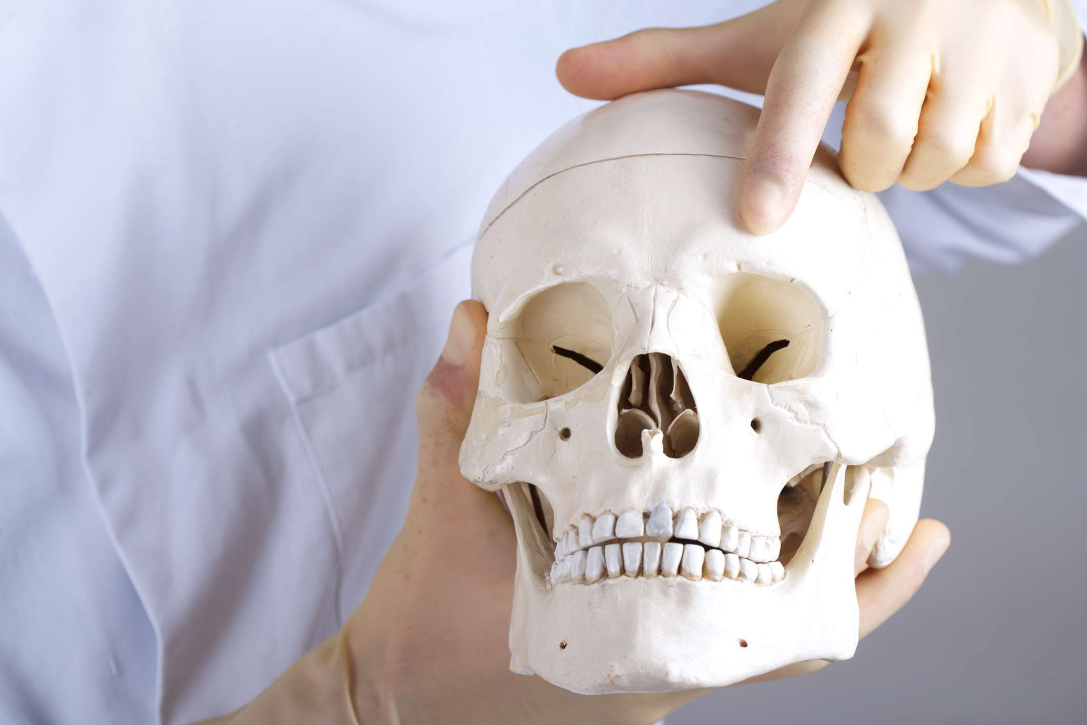 Pointing to supraorbital nerve on a model of a skull