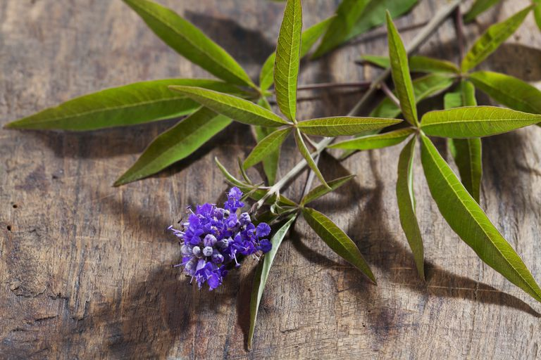 Chasteberry for Treatment of Menstrual Problems