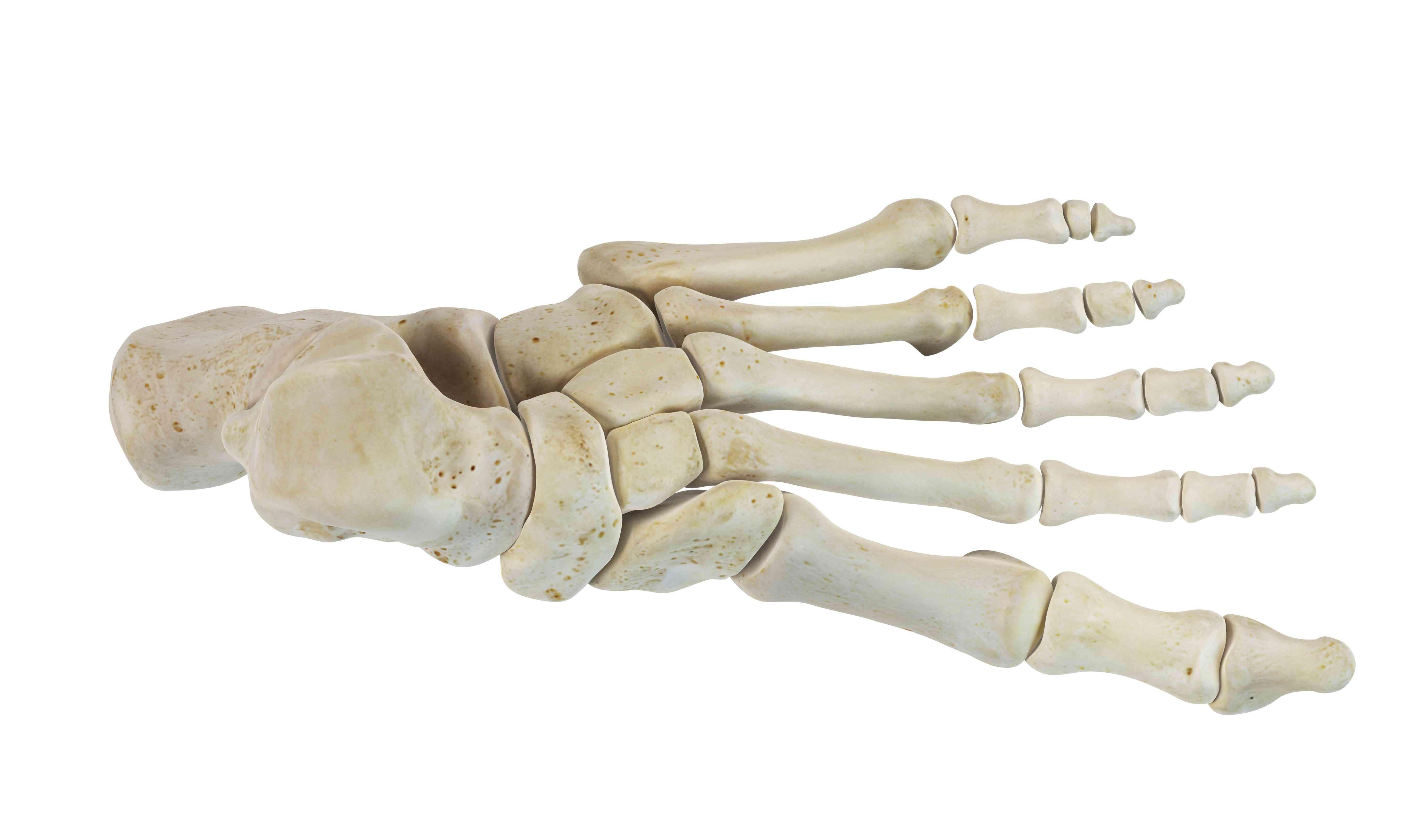Human foot bones on white surface