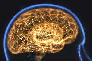 Human brain, illustration