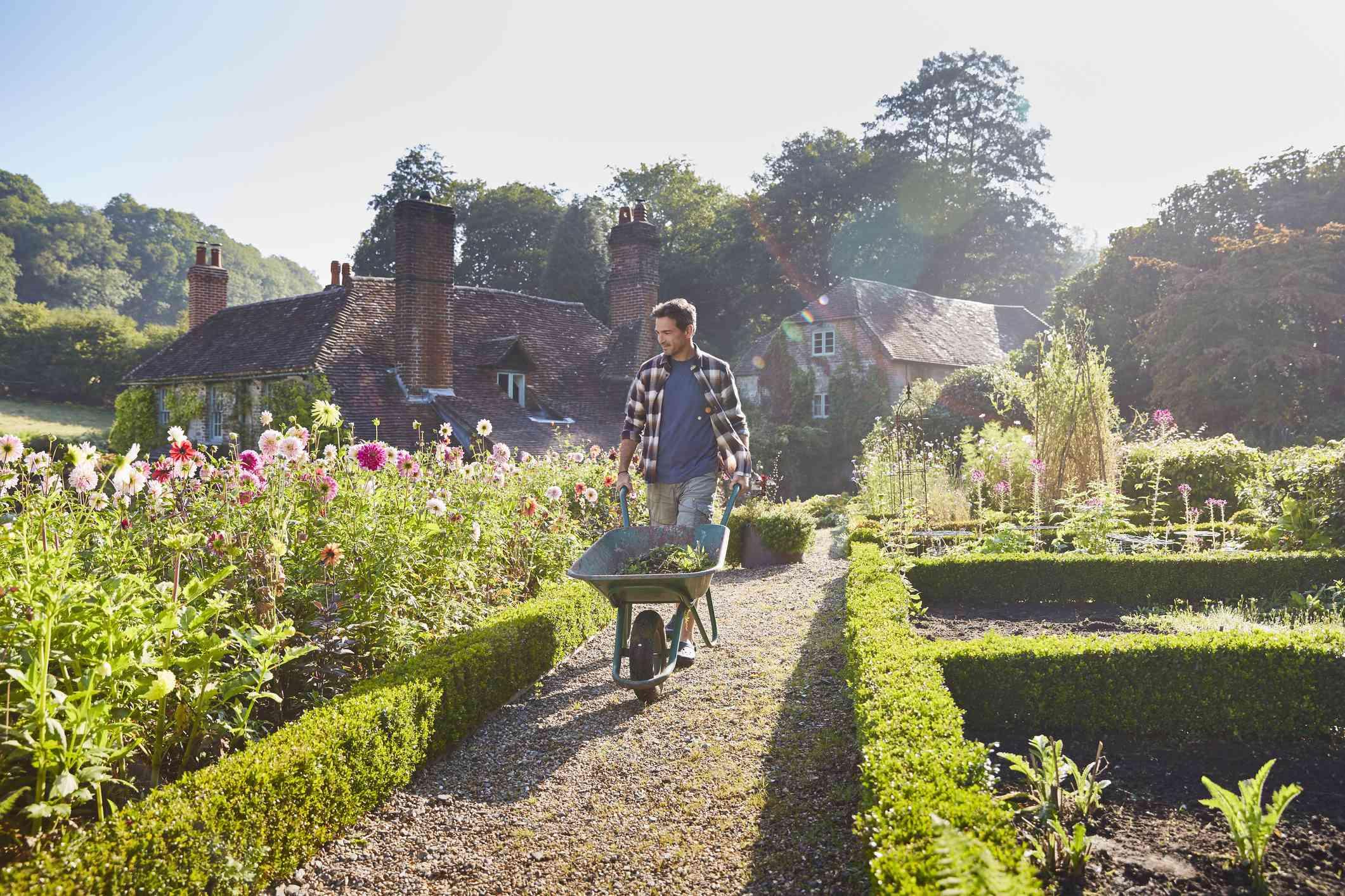 Man pushing a wheelbarrow through a garden on a sunny day