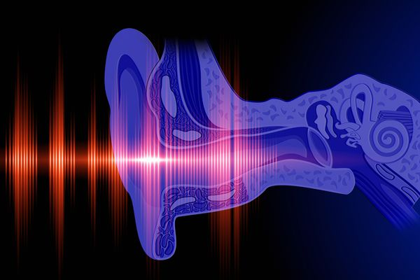 Anatomy of the cochlea and hearing