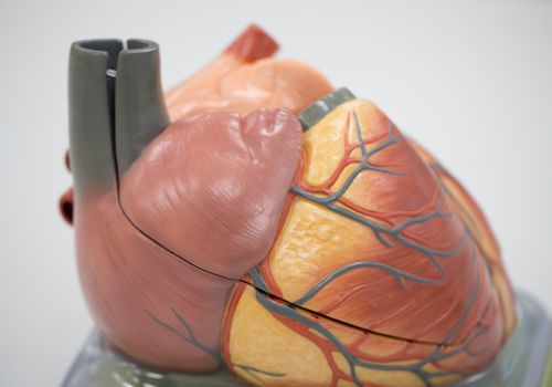 The pericardium lines the heart, and a pericardial effusion may occur with cancer