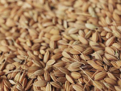 A pile of wheat grains