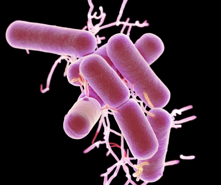 Probiotics to Help Manage Multiple Sclerosis