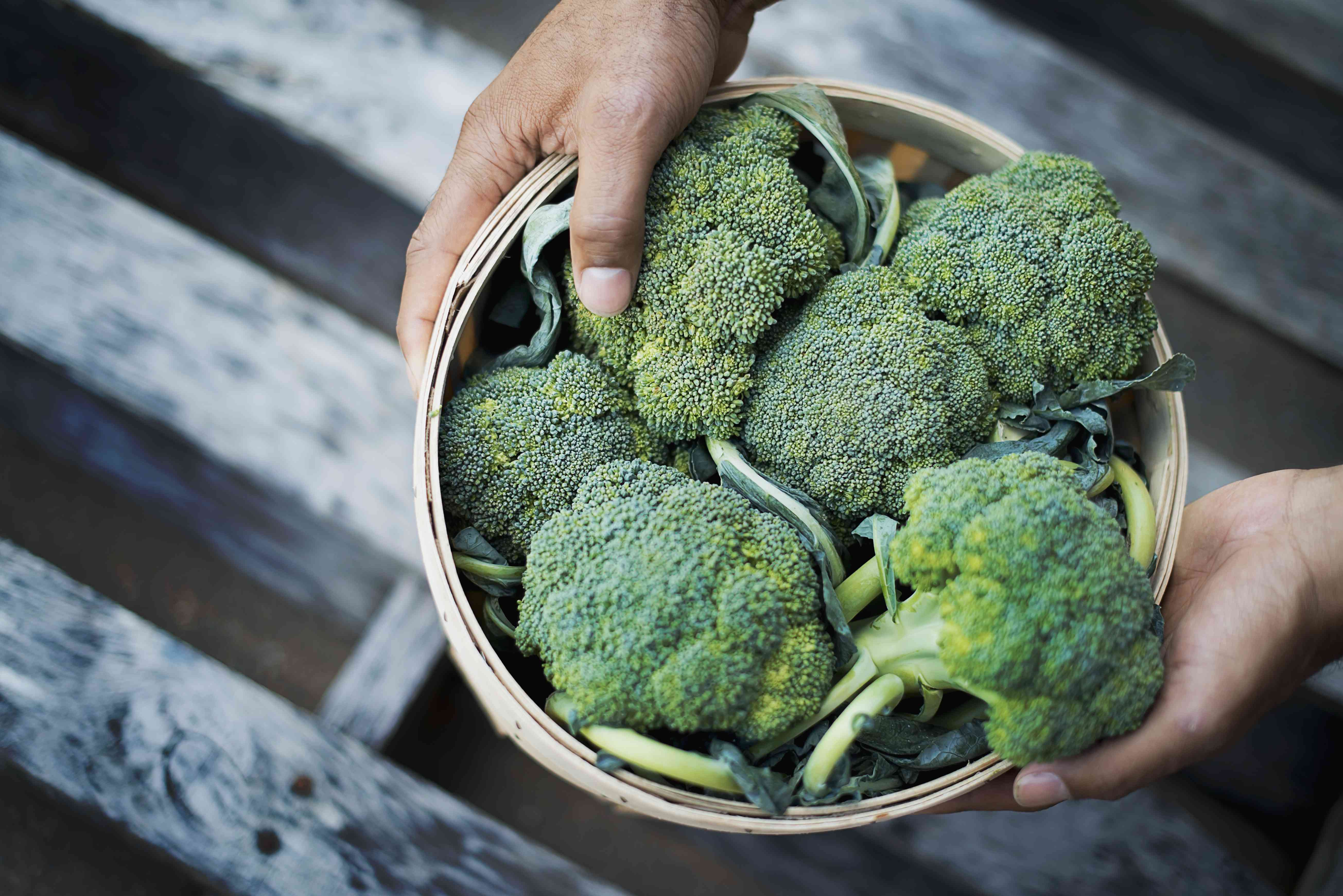 Organic Broccoli in basket just harvested