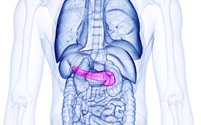 Pancreas, illustration