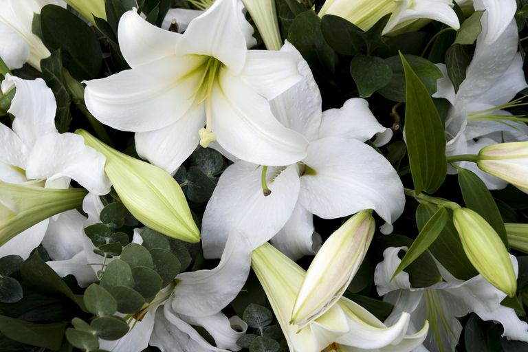 Symbolic meanings of funeral and sympathy flowers mourning lilies mightylinksfo