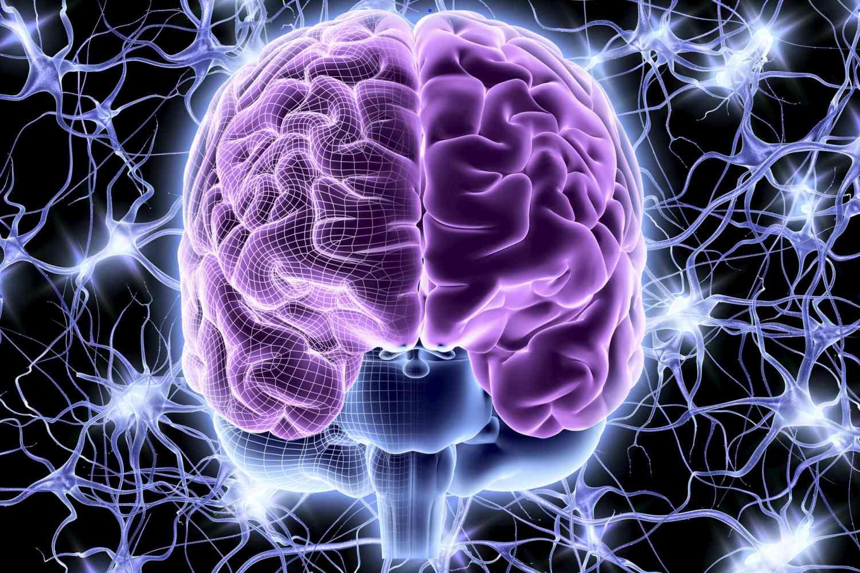 Brain and Nerve Cells illustration