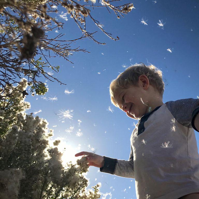 Boy touching flowers