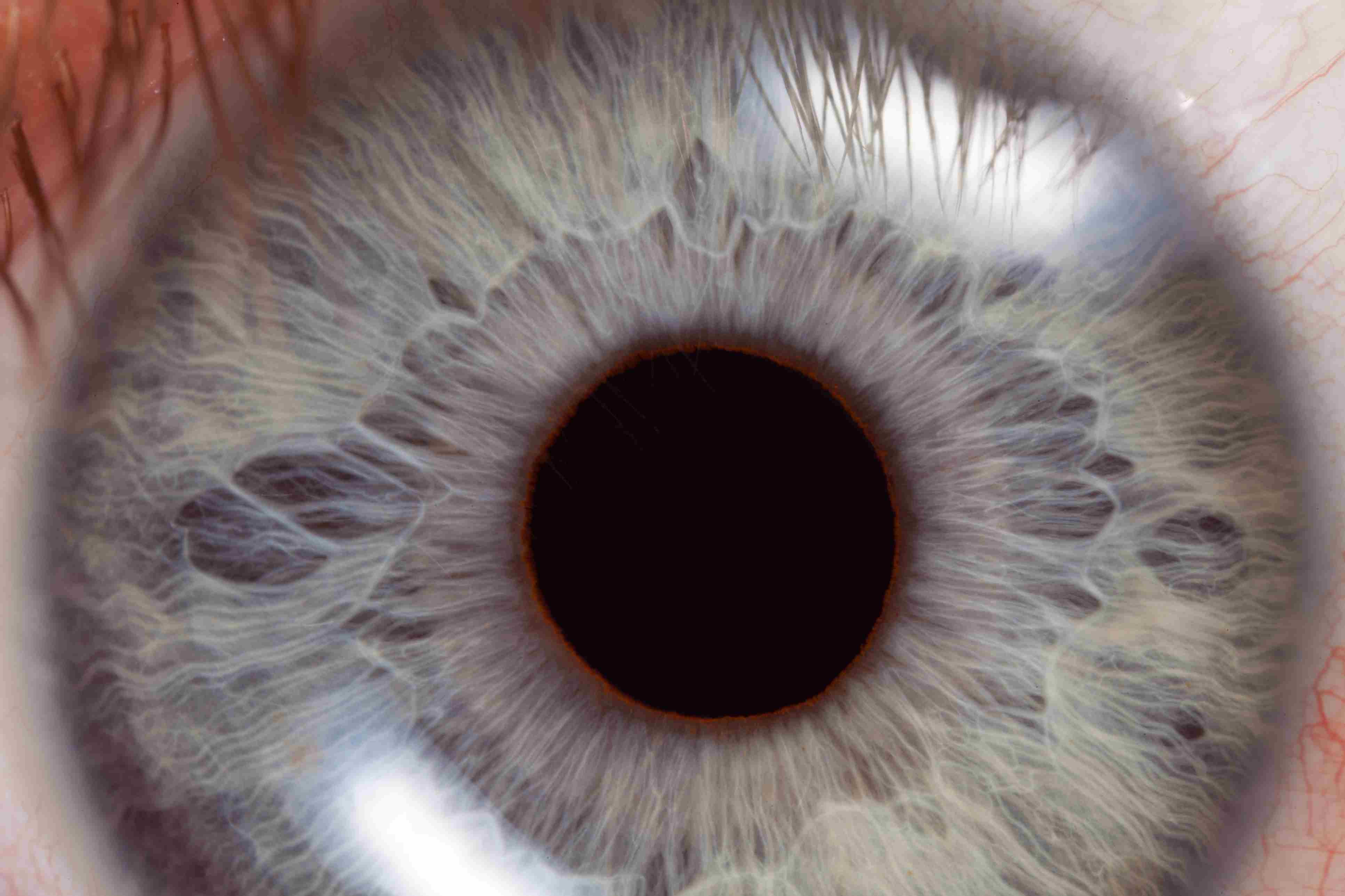 048558efb6b Light Response Pupil Test. close up of the eye