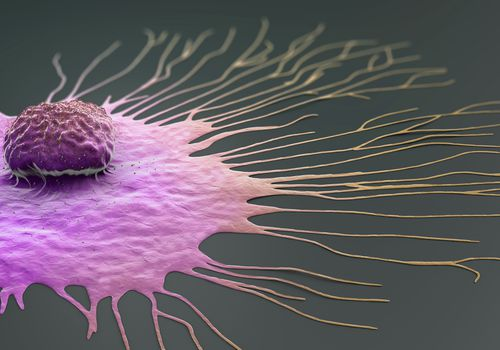 migrating breast cancer cell