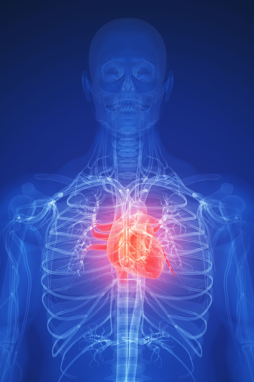 An Overview of Heart Disease