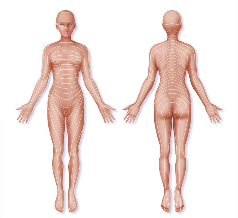 Dermatome Definition with Back Pain Example on