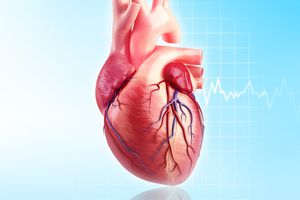 Human heart, artwork - stock illustration
