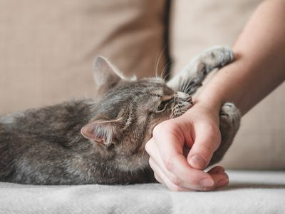Catch with claws around owner's arm