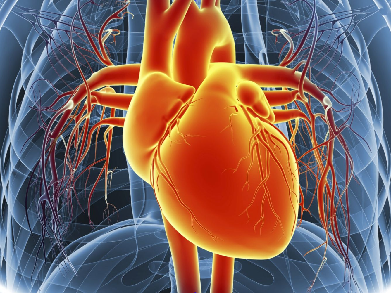 Based On The Diagram Oxygen Flows Through The Circulatory ...