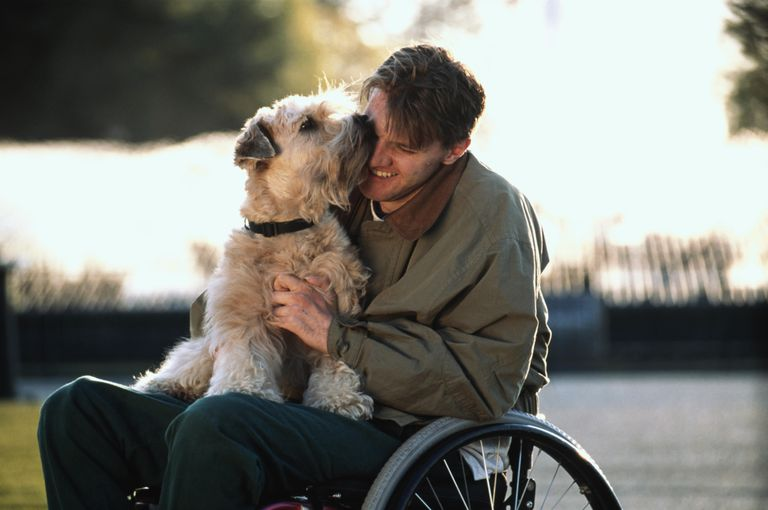 Man using wheelchair, playing with dog as part of 'pet therapy'