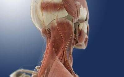 Rendering of the cervical spine