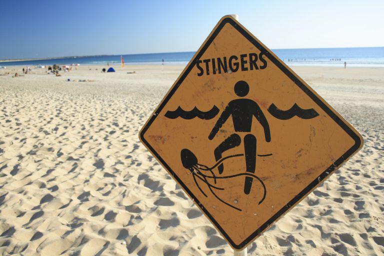 Jellyfish warning sign