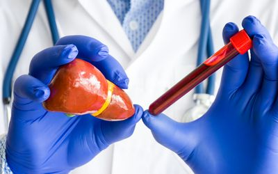 Laboratory medical diagnostics, tests and analysis for liver or hepar concept photo. Doctor or laboratory technician holds in one hand laboratory test tube with blood, in other hand - figure of liver - stock photo