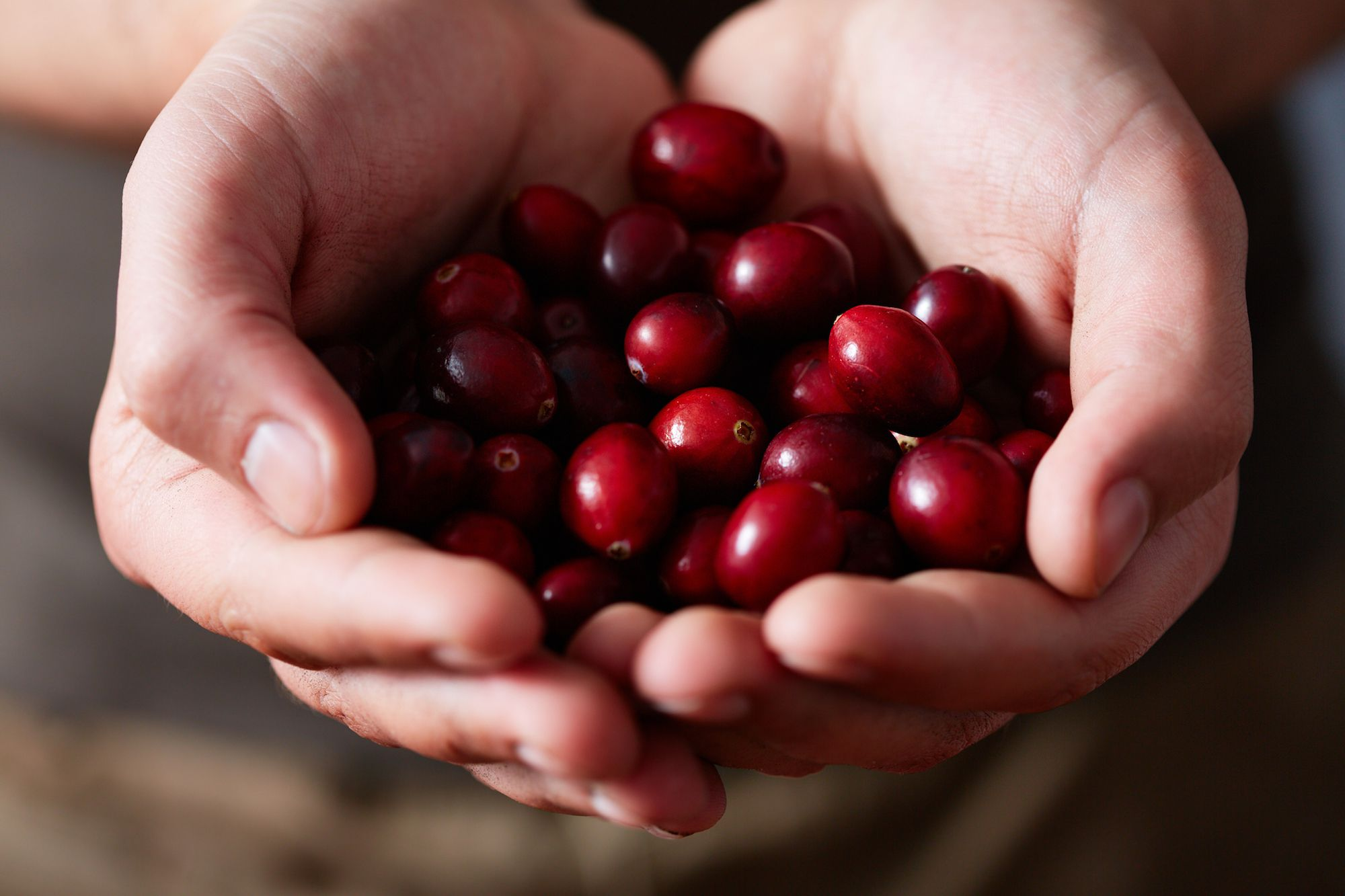 Can Cranberries Lower Cholesterol?