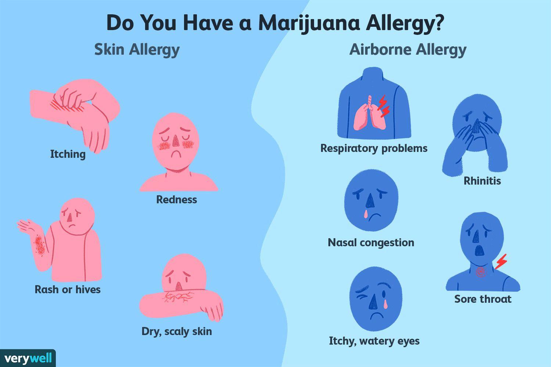 marijuana allergy symptoms