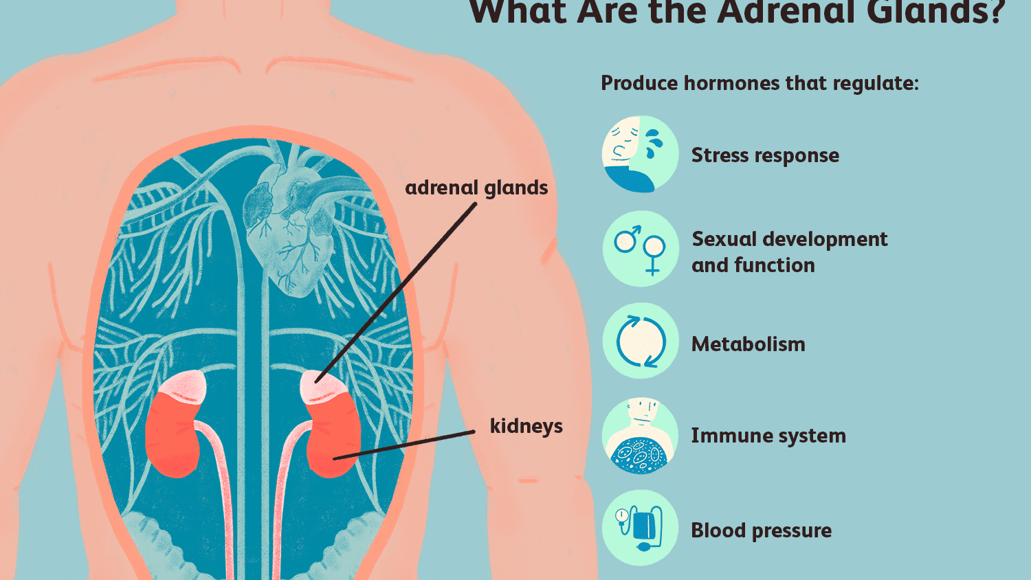 When Lung Cancer Spread To The Adrenal Glands