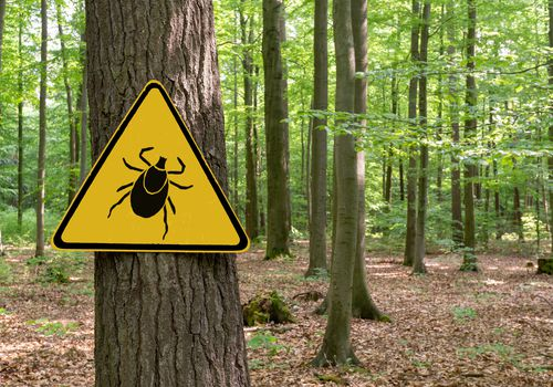 A photo taken in a forested area with a sign on a tree, a yellow triangle warning sign with an image of a tick on it.