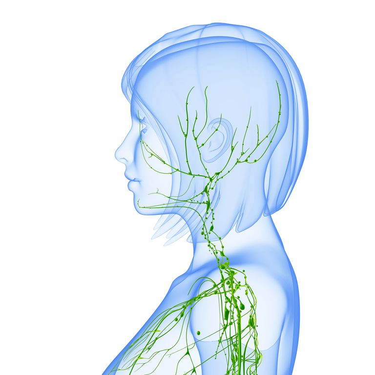 Illustration of a lymphatic system, head neck