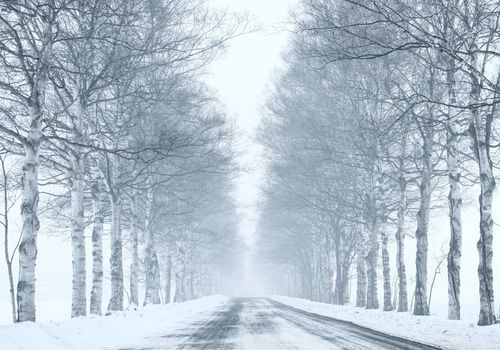photo of a tree-lined road in winter with snow on the ground