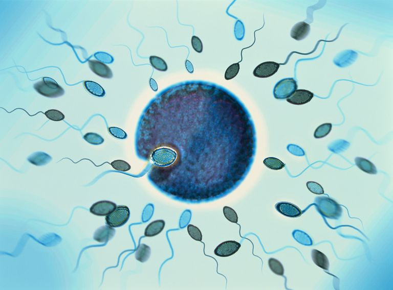 Sperm Inseminate Egg - Sex and Reproduction