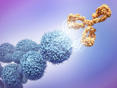 Monoclonal antibody attacking a cancer cell