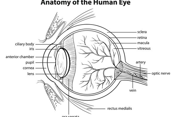 Human eye diagram with labels