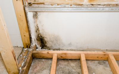 Mold found inside a bathroom wall during remodeling