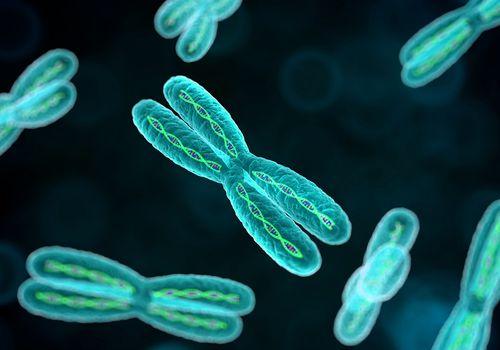 An illustration of chromosomes.
