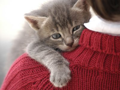 Small and cute kitten on little girl shoulder