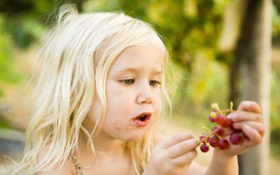 Small girl eating grapes