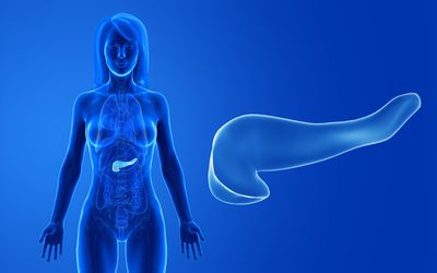 Medical illustration of pancreas highlighted in female body