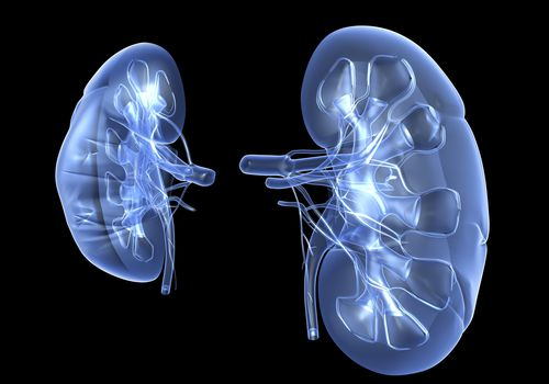 Kidneys graphic