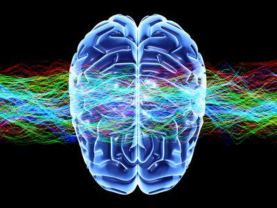 Human brain and waves