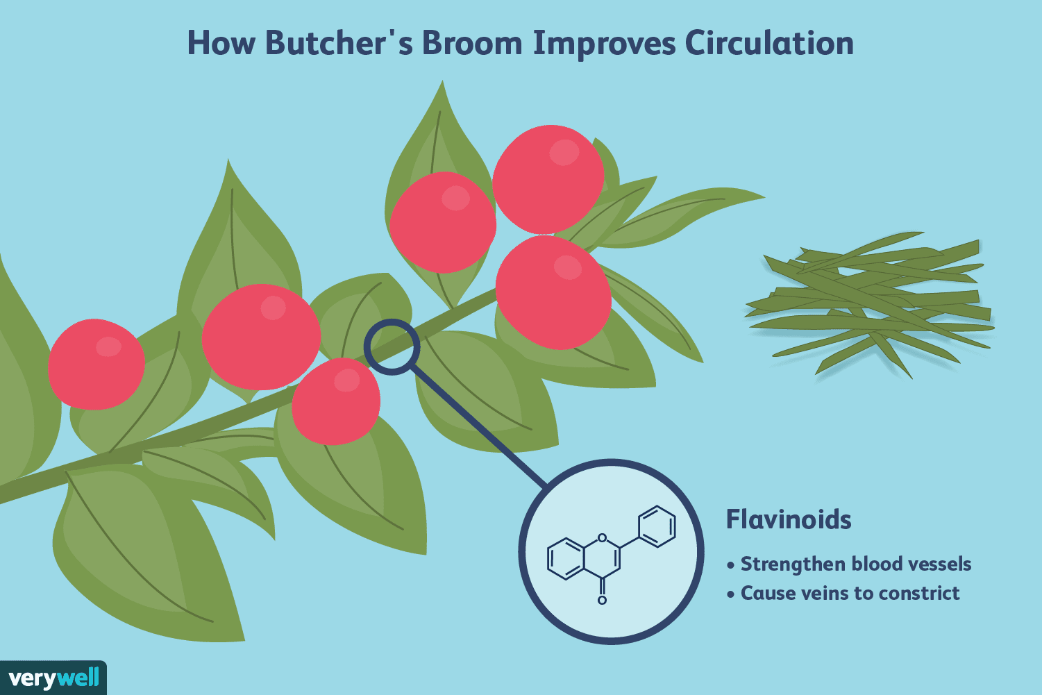 Butcher's Broom Benefits for Chronic Venous Insufficiency