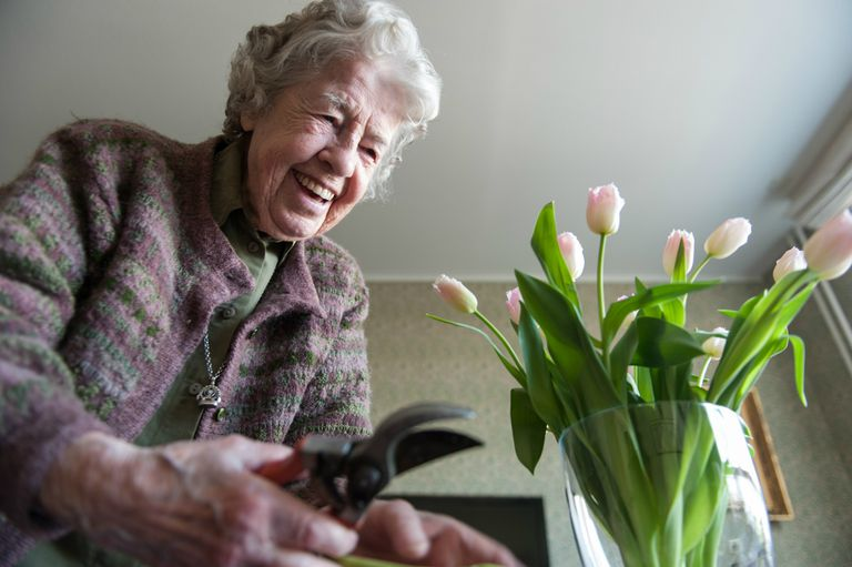 An older lady putting tulips in vase