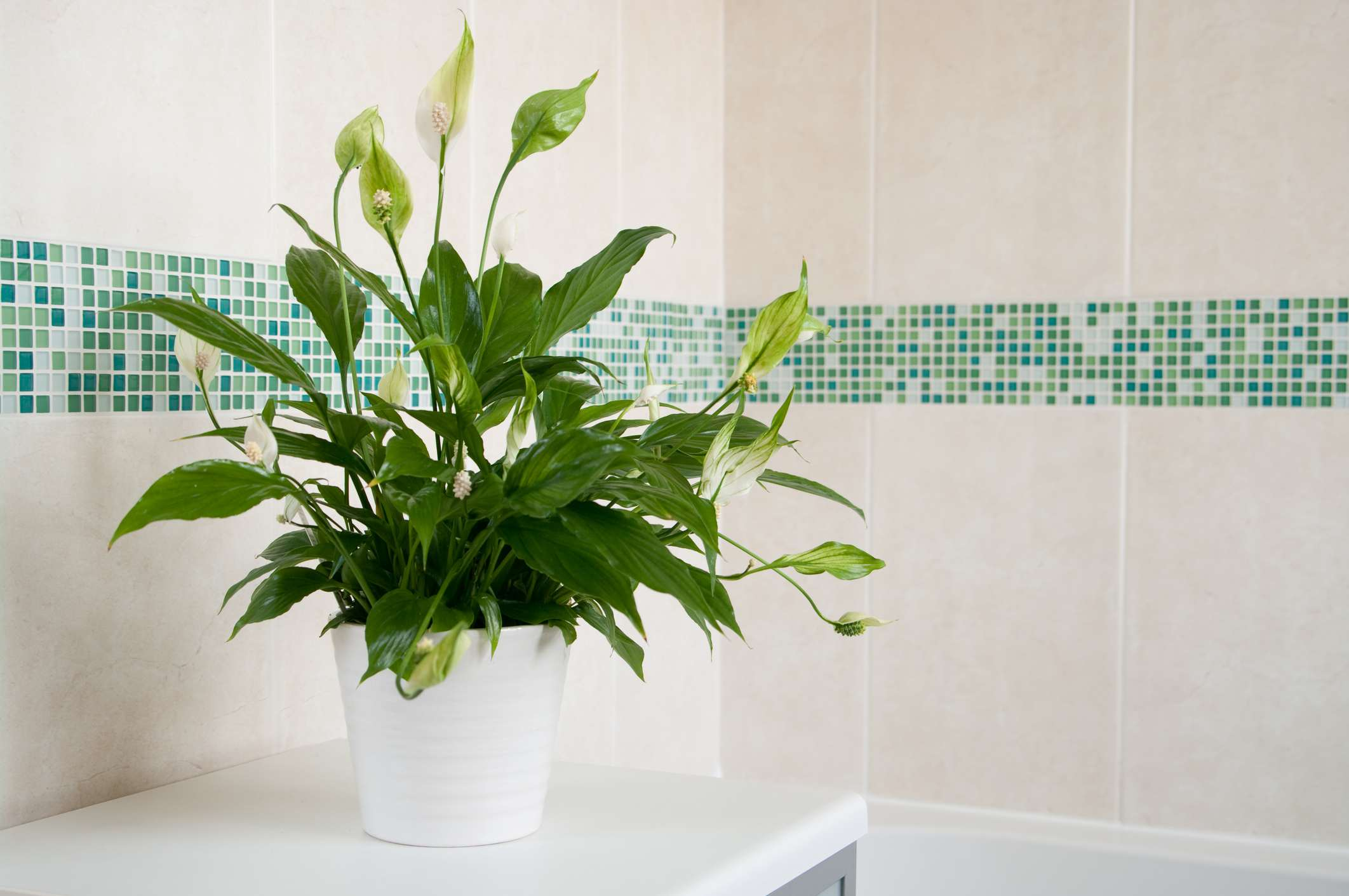 Houseplants That May Purify Indoor Air on indoor spices, indoor trees, indoor organic gardening, indoor palms, indoor orchids, indoor plants, indoor ferns, indoor shrubs, indoor seedlings, indoor roses,