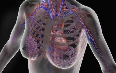 subclavian vein