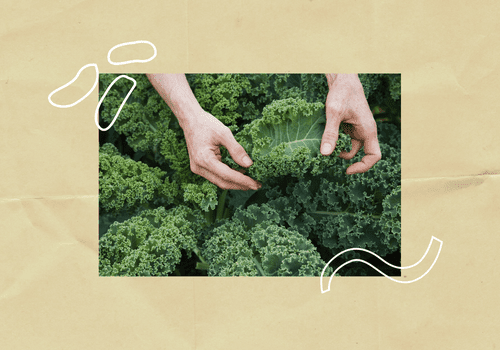 Someone holding kale.