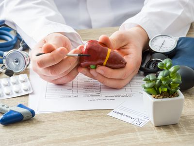 Physician showing a liver model
