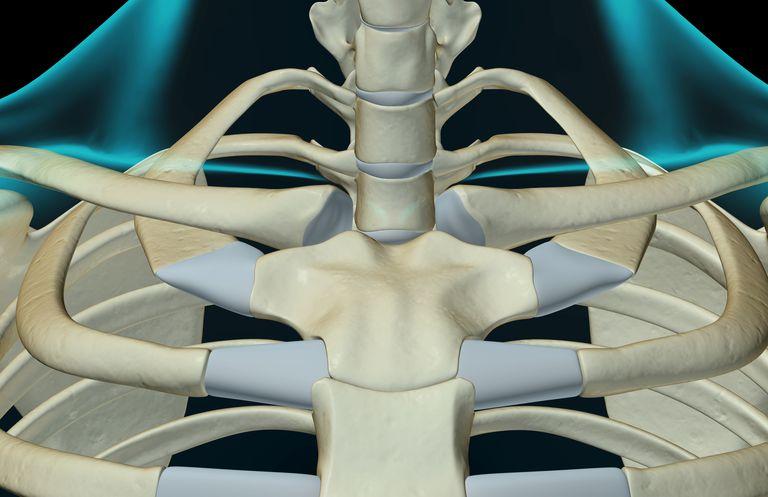 The bones of the neck