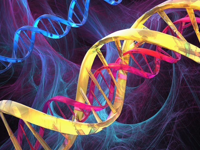 strands of dna