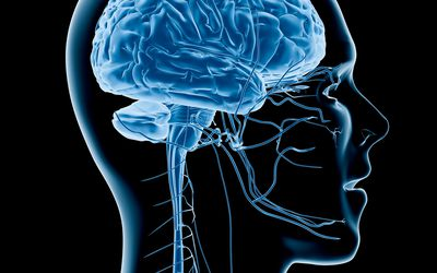 Human brain x-ray - stock photo